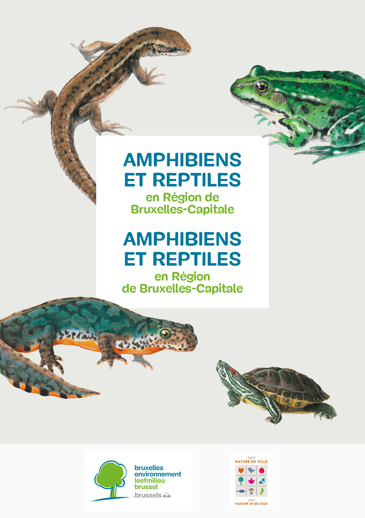 be-a5-amphibiens-bil-cover