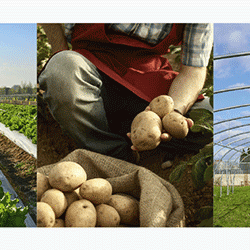 Boeren Bruxsel Paysans
